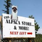 alpaca store.jpg